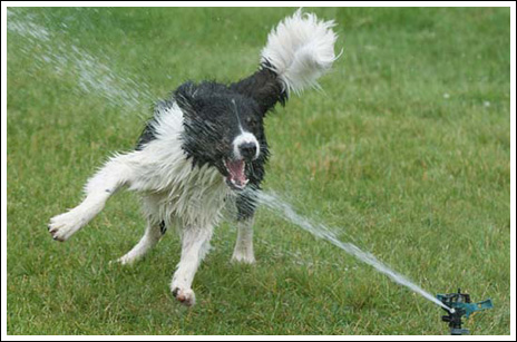 Dogs and Sprinklers!