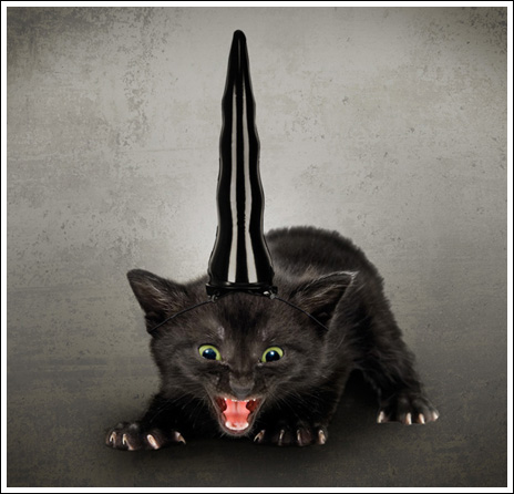 BaraSkit.se - Unicorn horn for cats | 464 x 446 jpeg 61kB