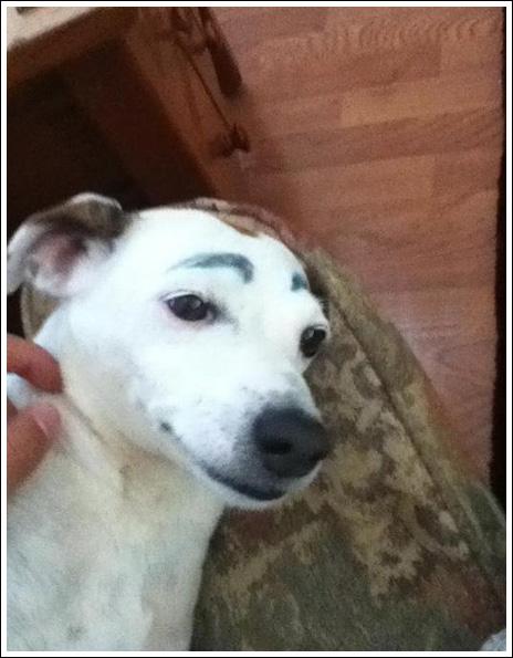 BaraSkit.se - Dogs with eyebrows