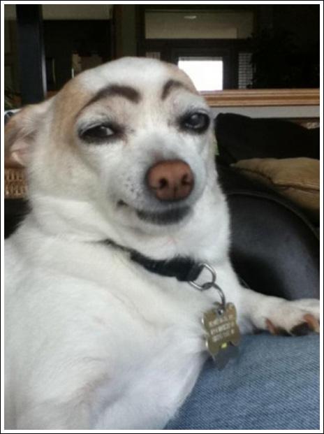 Baraskit Se Dogs With Eyebrows