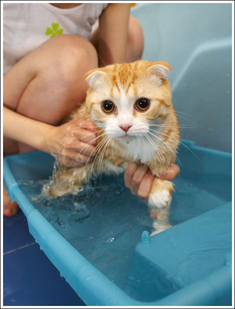 Imagenes De Un Baño Sucio:Cats Washing Themselves